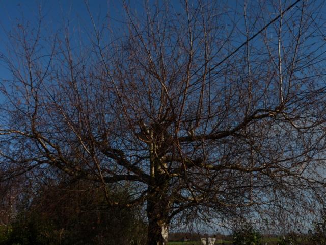 Nos arbres en hiver 2018 Boulea10