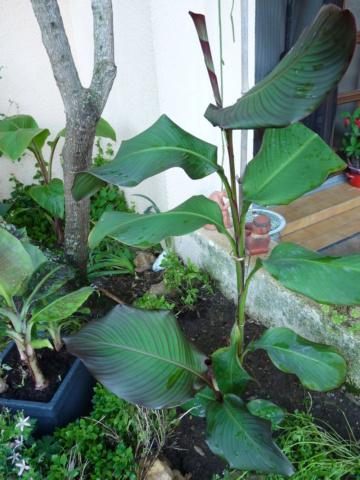 jardins de soleil Canna_11