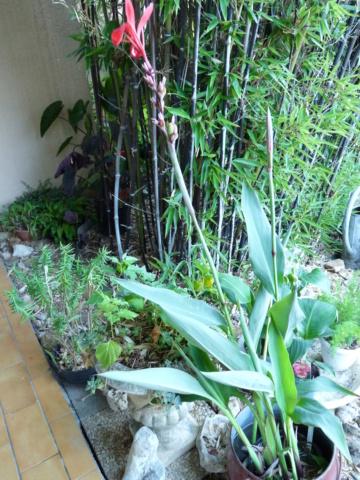 jardins de soleil Canna_12