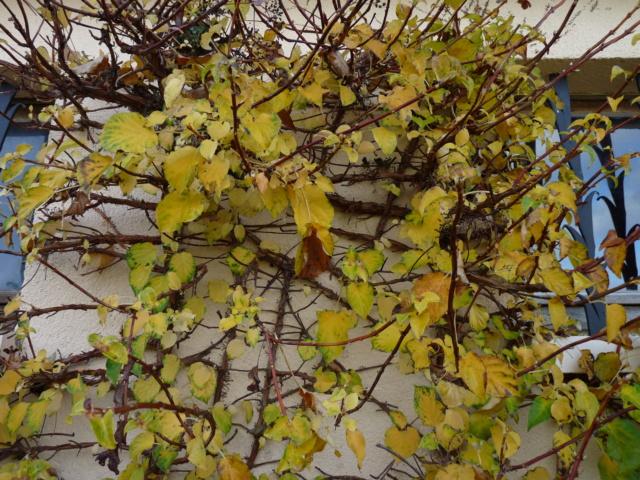 Couleurs d'automne 2019 Horten11