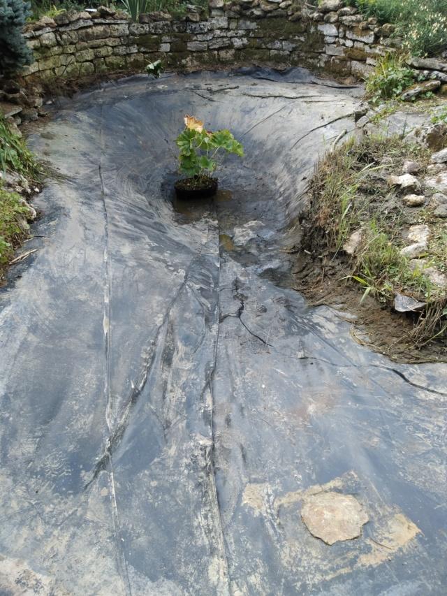 Rénovation/construction d'un bassin Img_2013
