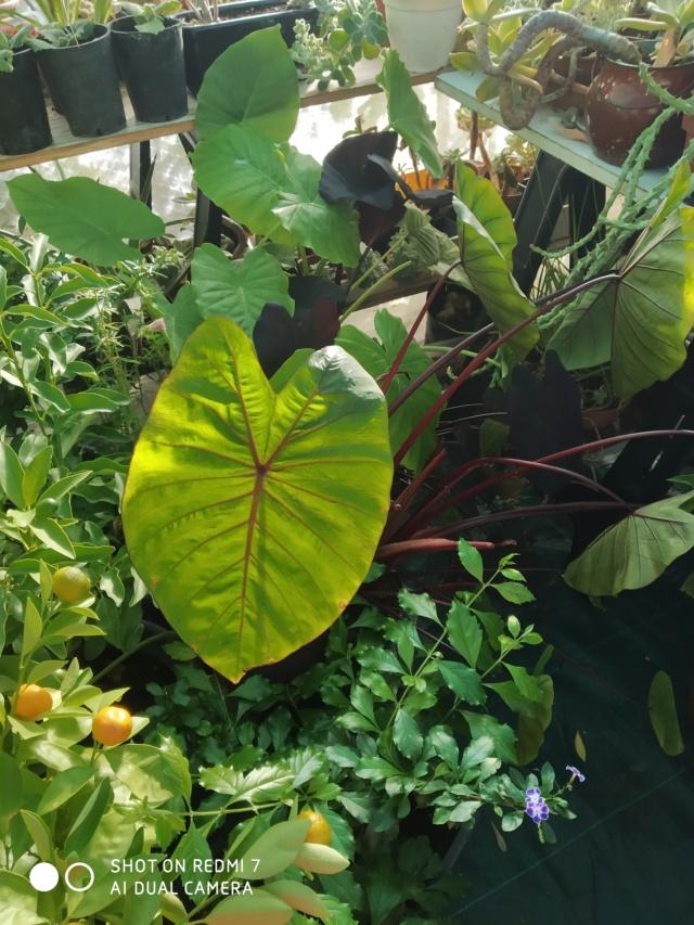 Hivernage de vos plantes 2020 Img_2090