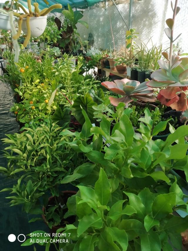 Hivernage de vos plantes 2020 Img_2091