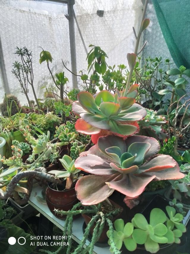 Hivernage de vos plantes 2020 Img_2092