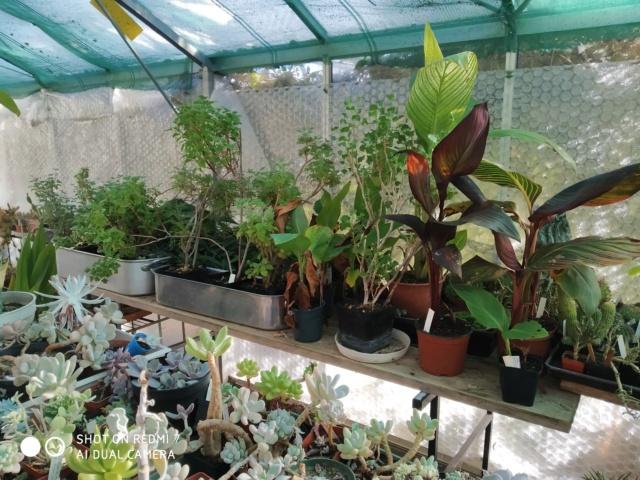 Hivernage de vos plantes 2020 Img_2093