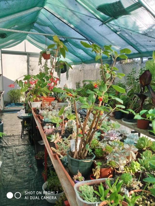 Hivernage de vos plantes 2020 Img_2095