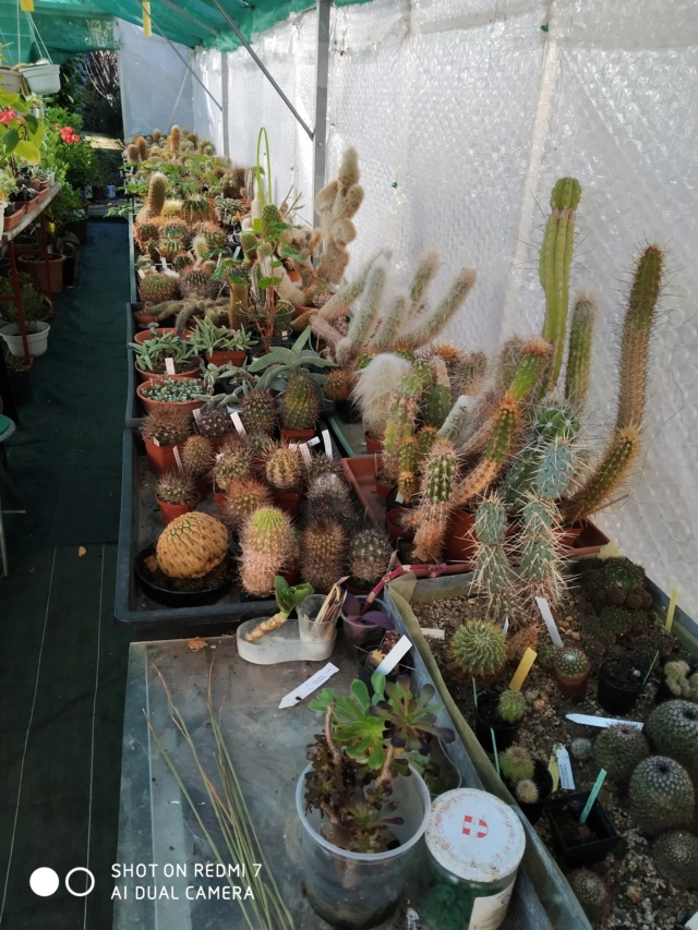 Hivernage de vos plantes 2020 Img_2096