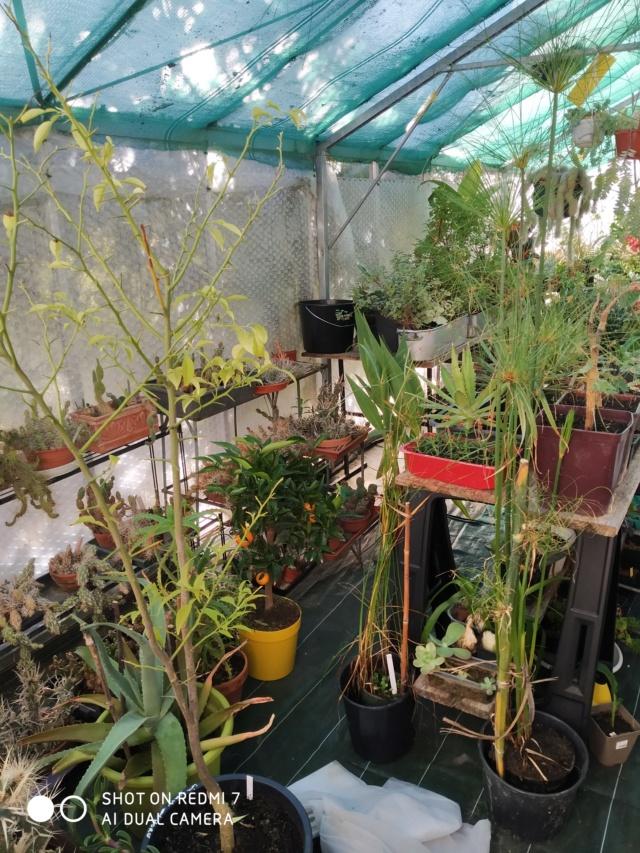 Hivernage de vos plantes 2020 Img_2098