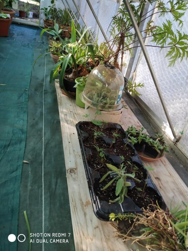 Hivernage de vos plantes 2020 Img_2099