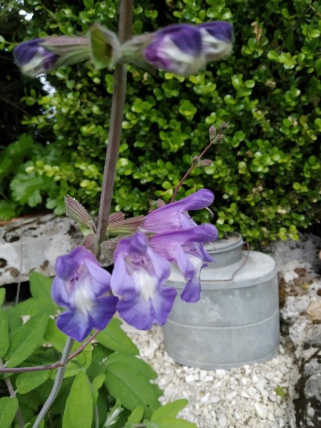 Air d'été au jardin Img_2136