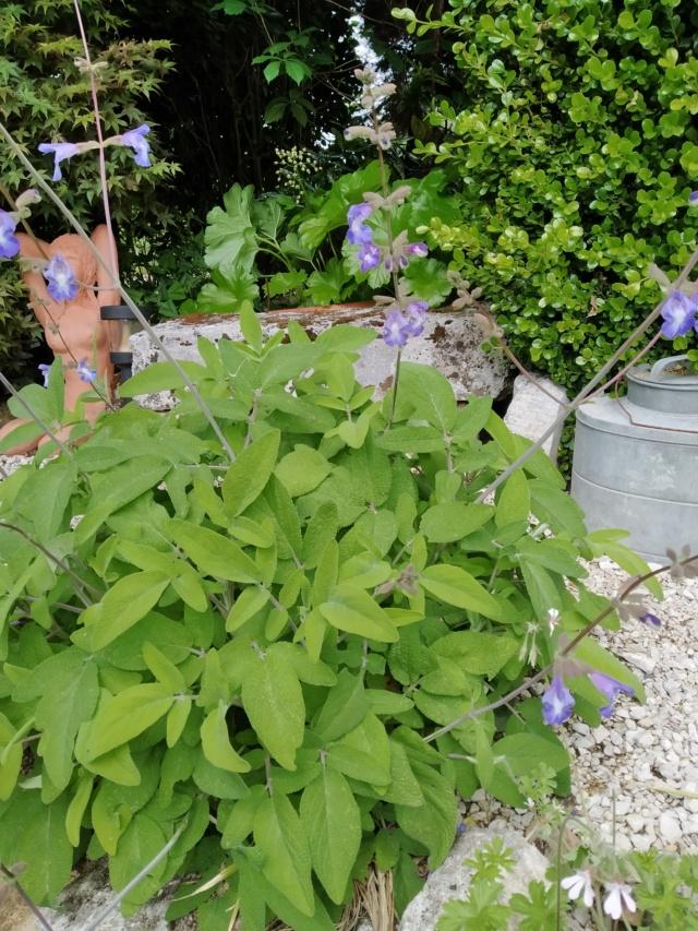 Air d'été au jardin Img_2137