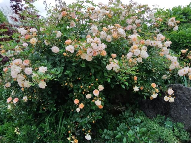 Air d'été au jardin Img_2138