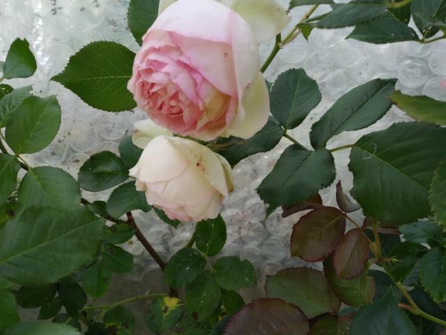 Air d'été au jardin Img_2142