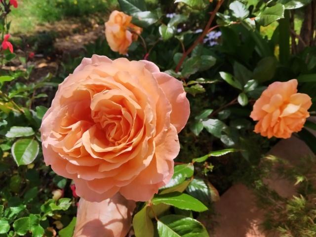Air d'été au jardin Img_2143