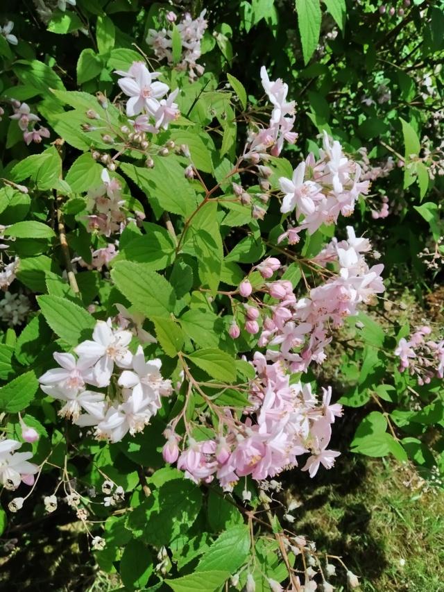 Air d'été au jardin Img_2147