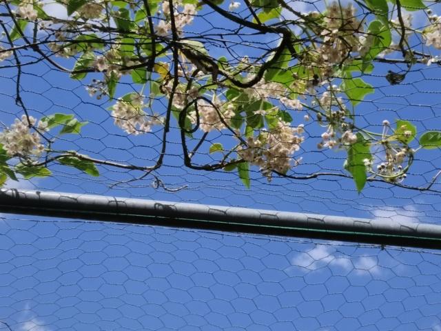 Air d'été au jardin - Page 2 Img_2150