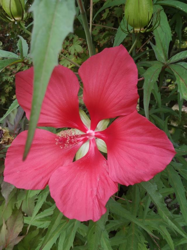 Dernières fleurs d'été, premiers feux d'automne Img_2163