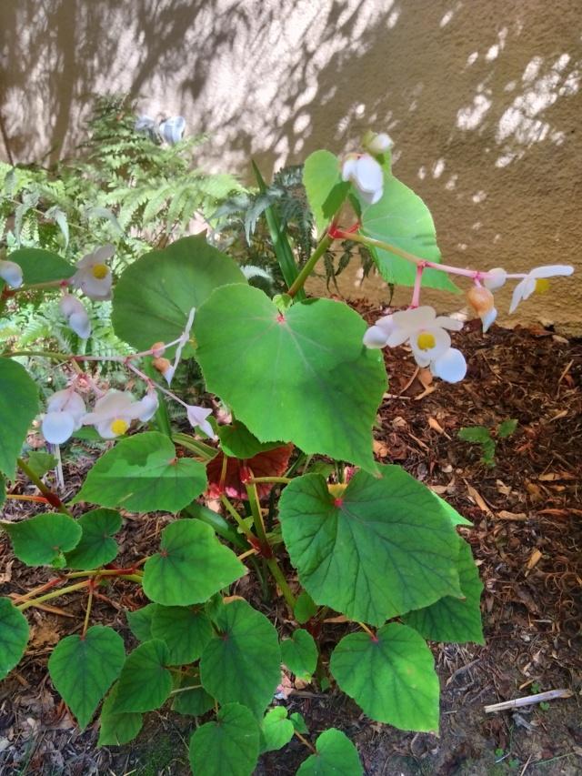 Dernières fleurs d'été, premiers feux d'automne Img_2166