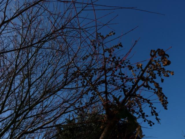 Nos arbres en hiver 2018 P1070123