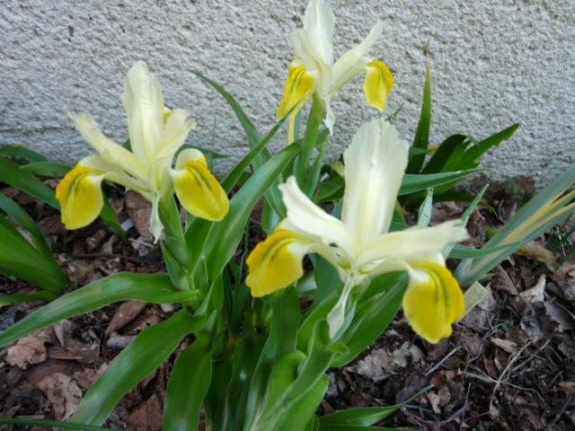 brins de printemps - Page 3 P1080129