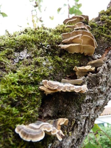 Mousses, lichens et autres fantaisies de l'hiver P1090317