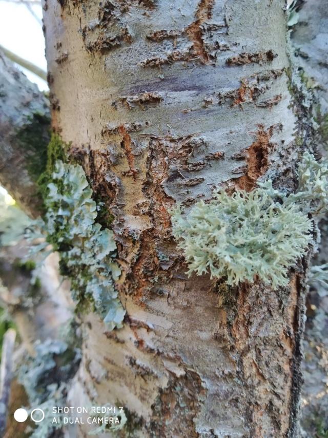 Mousses, lichens et autres fantaisies de l'hiver Paysag13