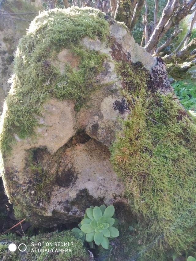 Mousses, lichens et autres fantaisies de l'hiver Paysag14