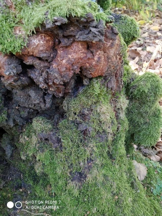 Mousses, lichens et autres fantaisies de l'hiver Paysag15