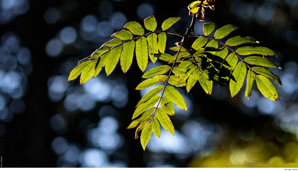 L'automne arrive _dsc1726