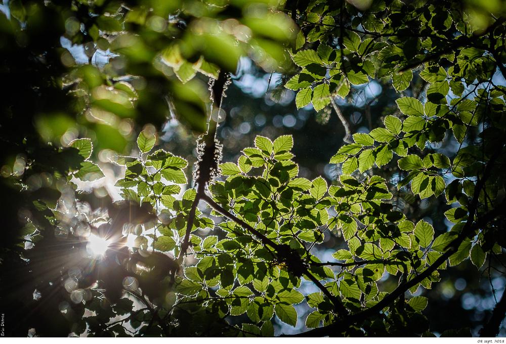 L'automne arrive _dsc1727