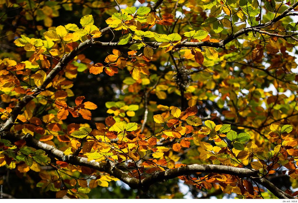 Vers Saint-Nizier l'automne s'installe _dsc2110