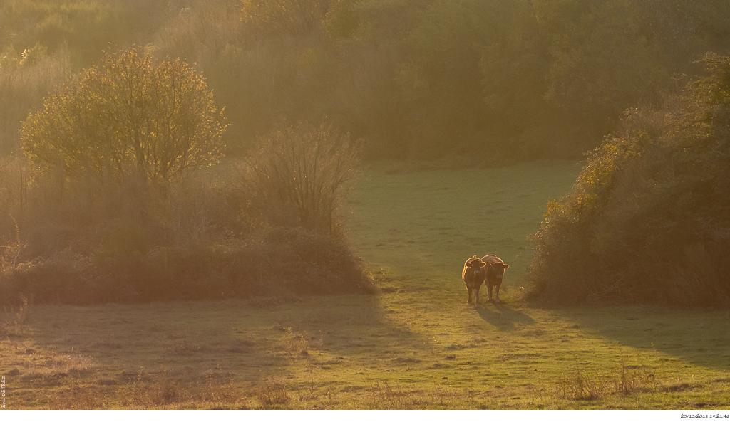 Lumières d'automne au col de l'Escrinet _dsc2416