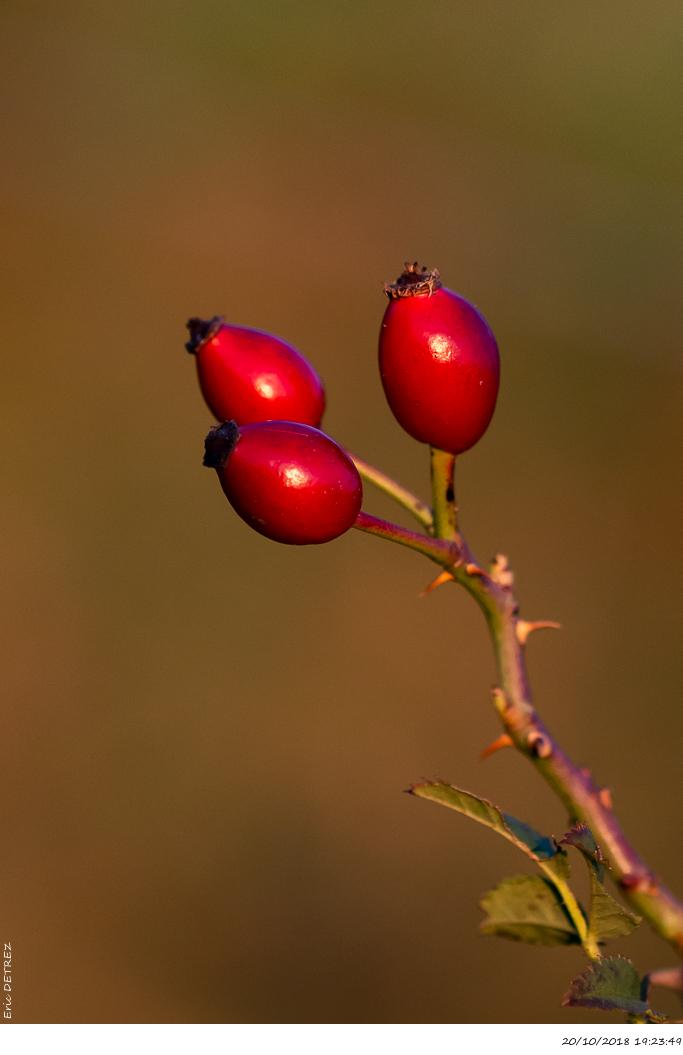 Lumières d'automne au col de l'Escrinet _dsc2417