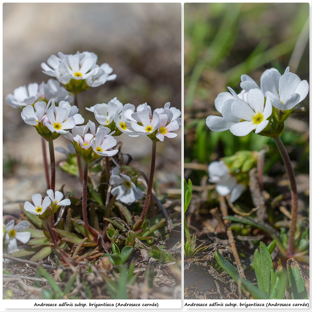 Retour sur 2018 et la flore alpine Aa110