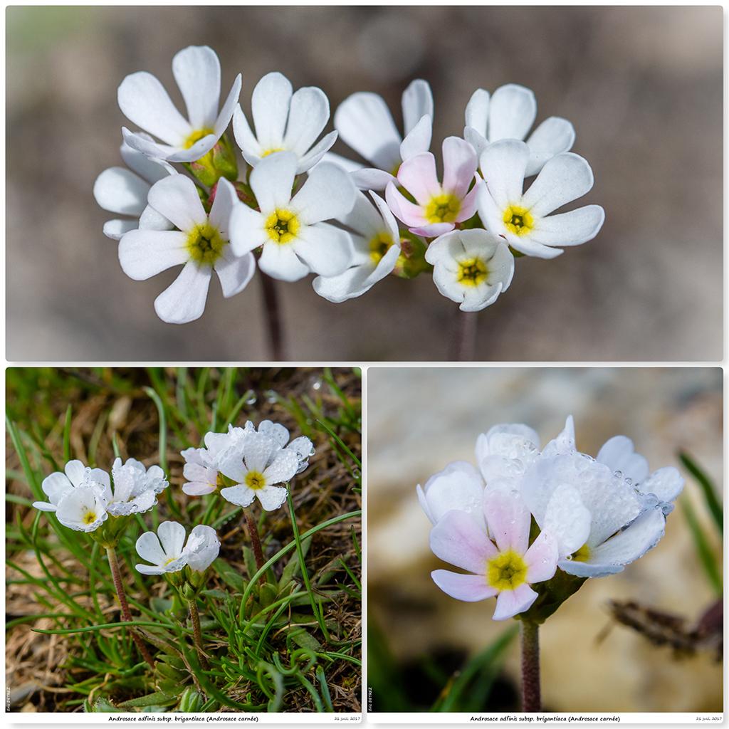 Retour sur 2018 et la flore alpine Aa210