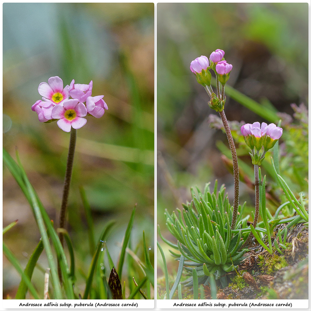 Retour sur 2018 et la flore alpine Aa310