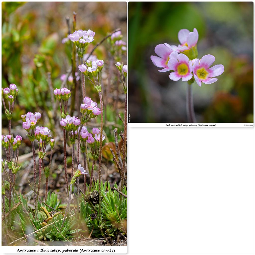 Retour sur 2018 et la flore alpine Aa410