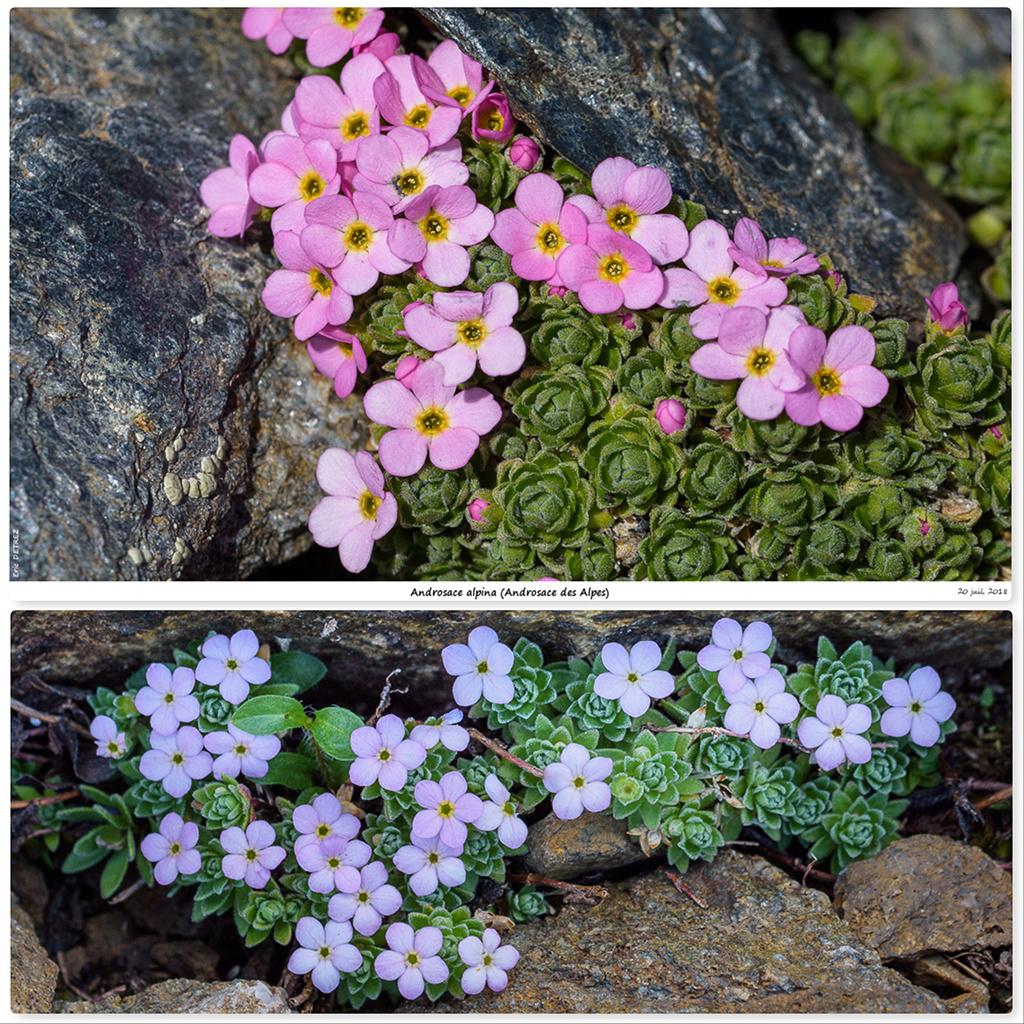 Retour sur 2018 et la flore alpine Ada110