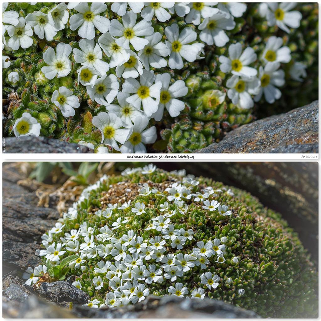 Retour sur 2018 et la flore alpine Ah111