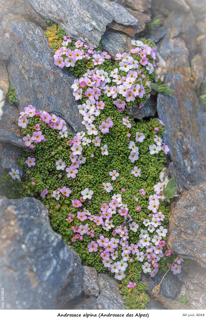 Retour sur 2018 et la flore alpine Andros25