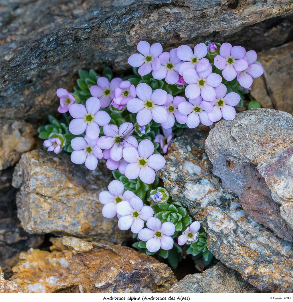 Retour sur 2018 et la flore alpine Andros26