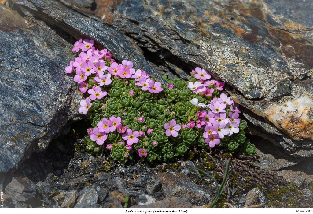 Retour sur 2018 et la flore alpine Andros27