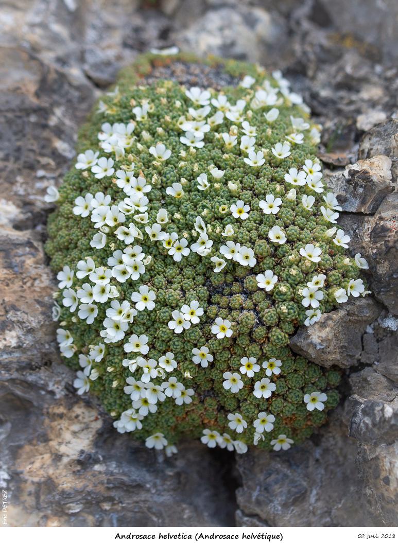 Retour sur 2018 et la flore alpine Andros28