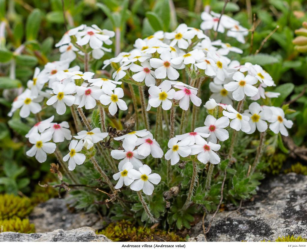 Retour sur 2018 et la flore alpine Andros29