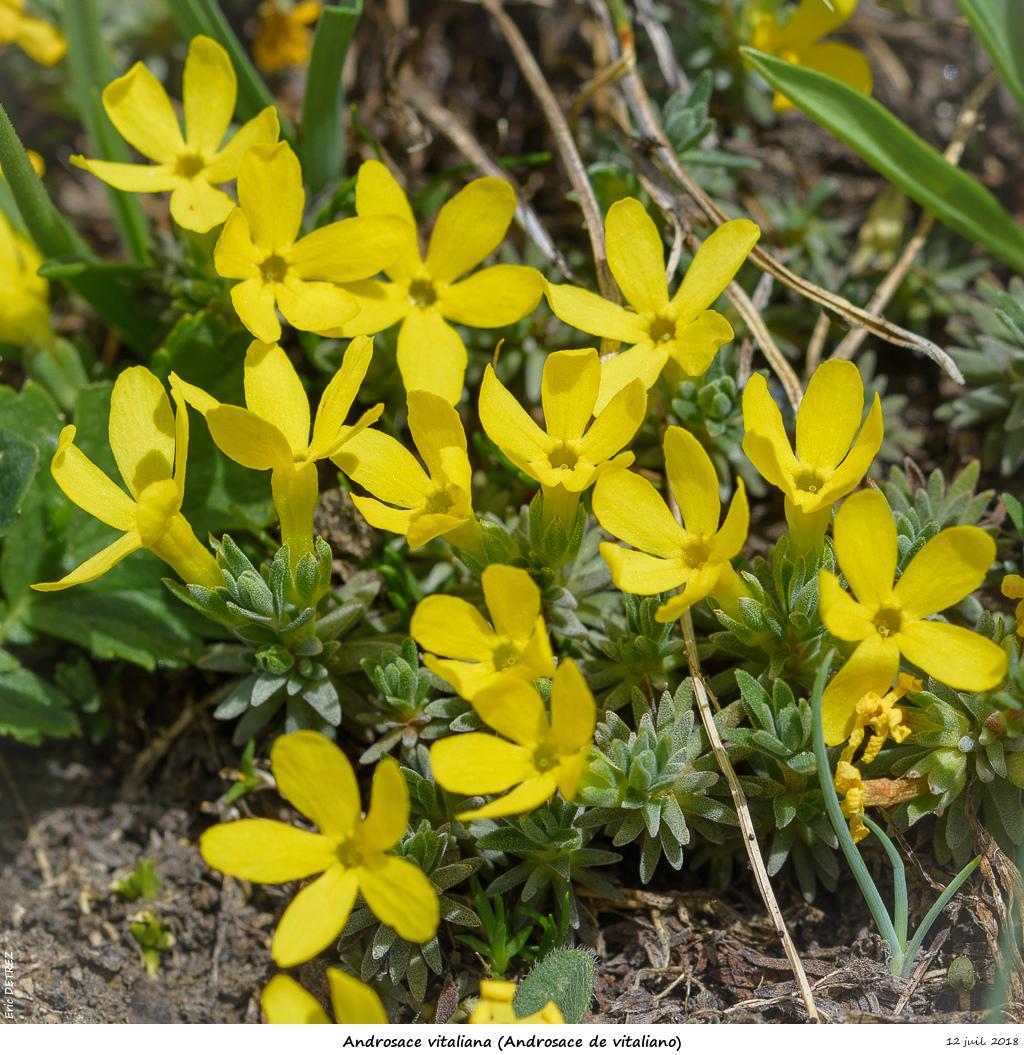 Retour sur 2018 et la flore alpine Andros30