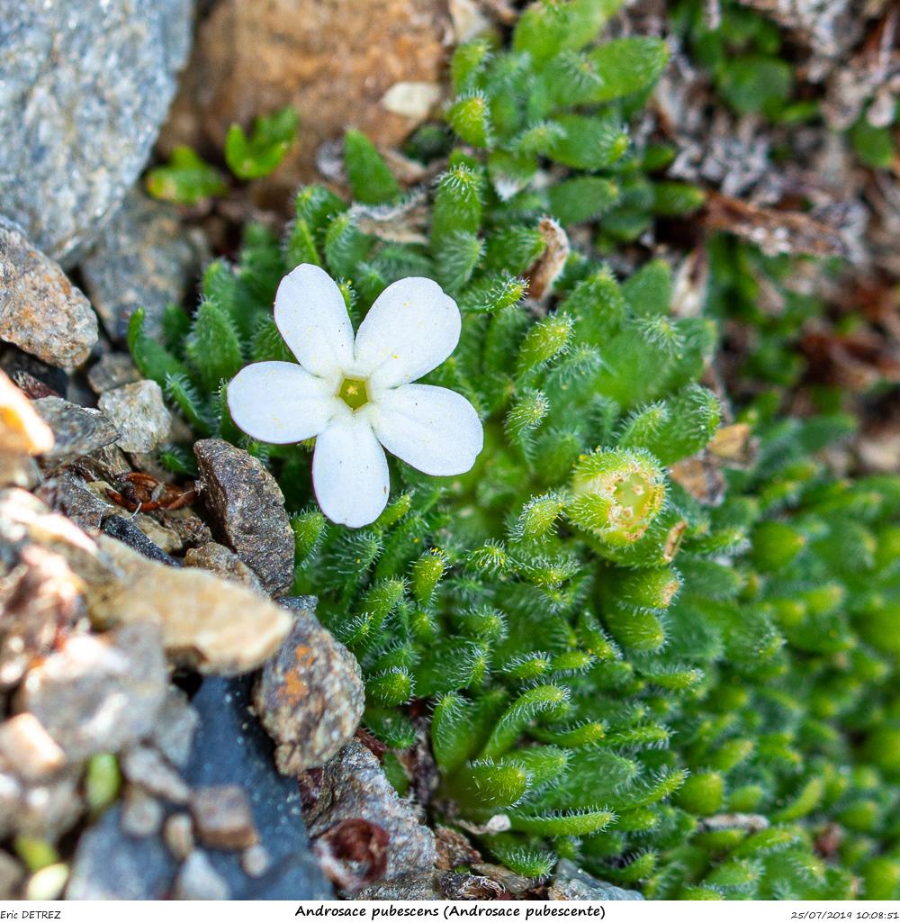 Huez entre flore et libellules Andros37