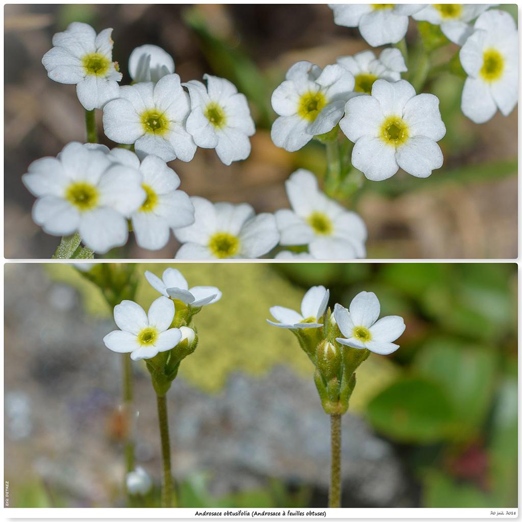 Retour sur 2018 et la flore alpine Ao111