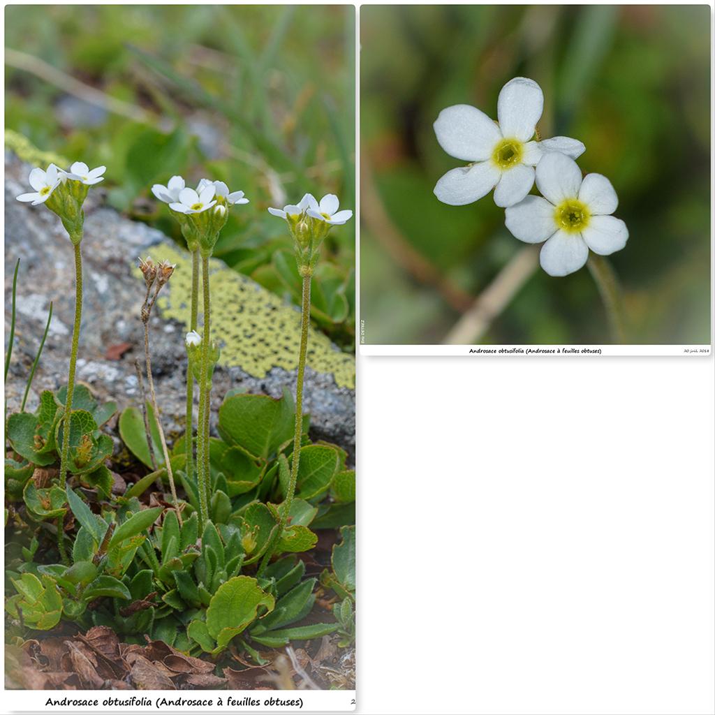 Retour sur 2018 et la flore alpine Ao211