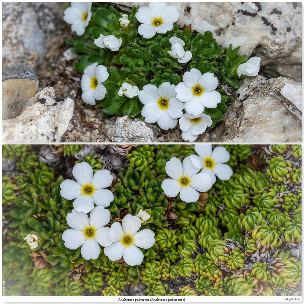 Retour sur 2018 et la flore alpine Ap110