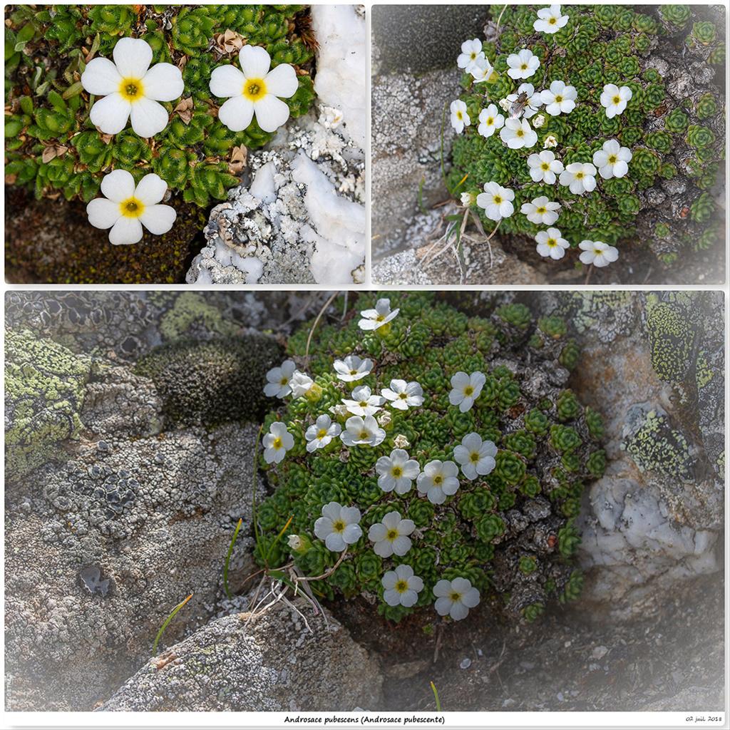 Retour sur 2018 et la flore alpine Ap210